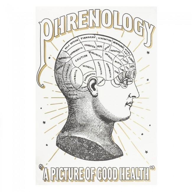 Phoenixx Rising-Phrenology Colour-in Poster